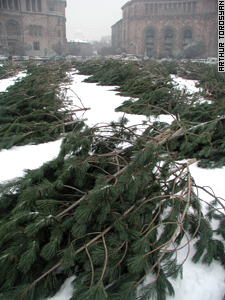 A garden of green waits to  form Republic Square's holiday tree